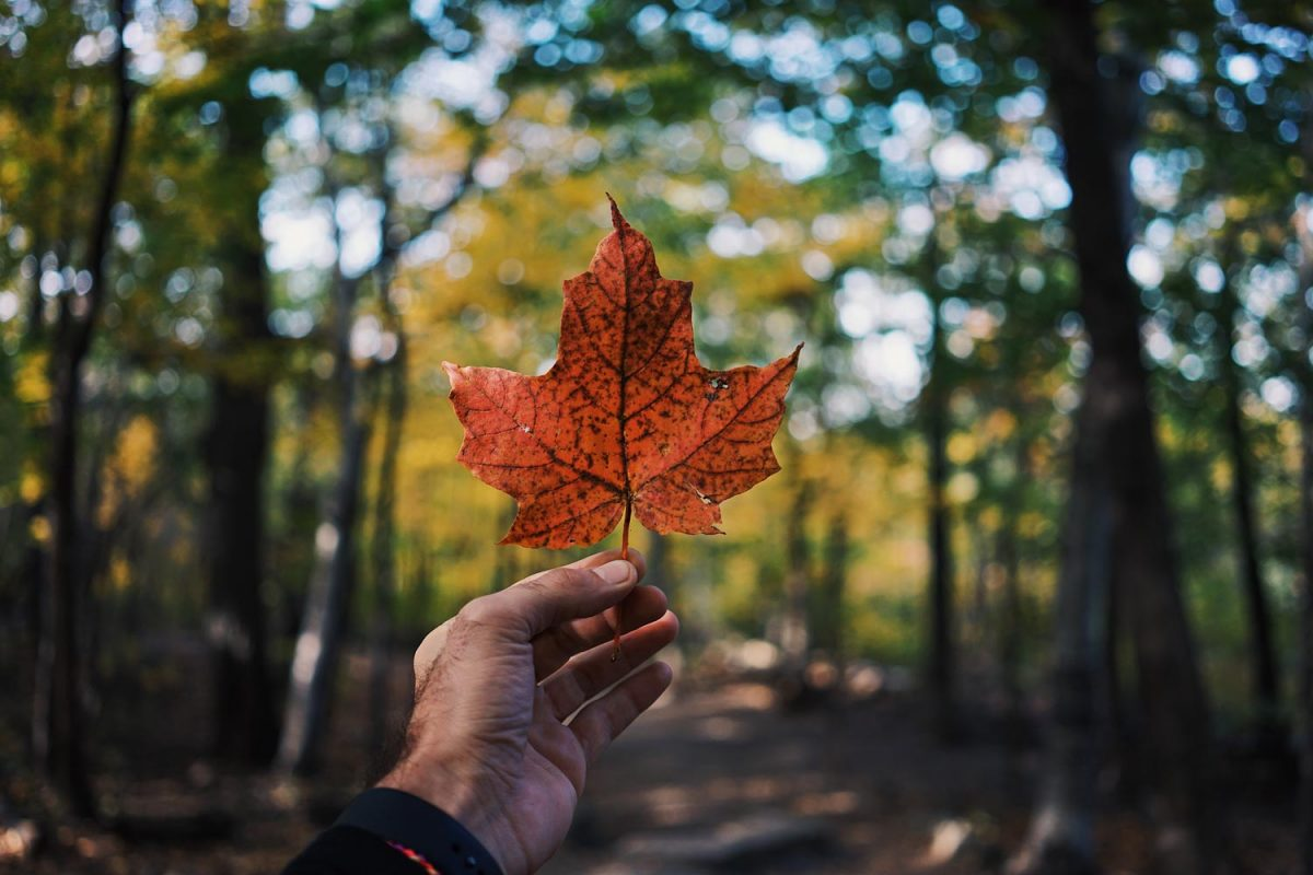 Maintaining your Canadian permanent resident status | Exeo Attorneys